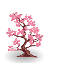 cherry tree with pink flowers sakura isolated on vector image