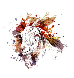 Color head of goat vector