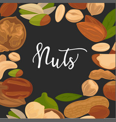 delicious nutritious nuts advertisement banner vector image