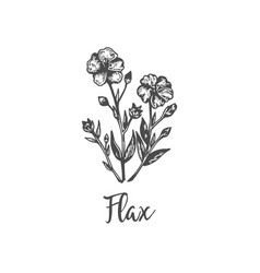 flax hand drawn outline vector image
