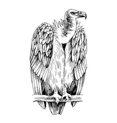 Monochrome griffon vulture on a white background vector