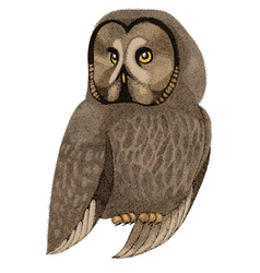 Owl drawn with pen and ink vector