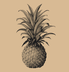 pineapple hand drawing vintage engraving style vector image
