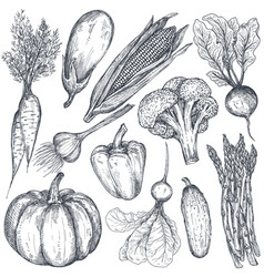 set of hand drawn farm vegetables in sketch vector image