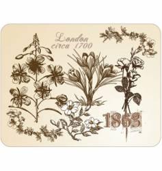 vintage floral illustrations vector image vector image