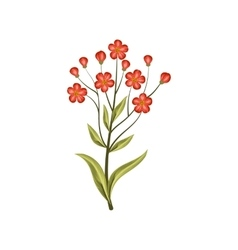 Beautiful red flowers isolated on white vector image