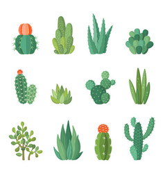 cartoon cactus and succulents cartoon set vector image