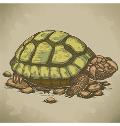 engraving turtle retro vector image