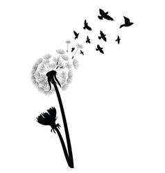 Silhouette a dandelion with flying seeds black vector