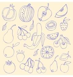 Sketches of fruit vector