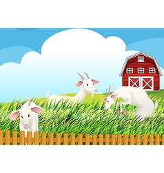 A farm with three goats vector image