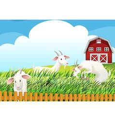 A farm with three goats vector