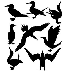 collection silhouettes blue-footed boobies vector image