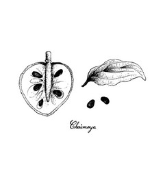 hand drawn of ripe cherimoya fruit on white backgr vector image