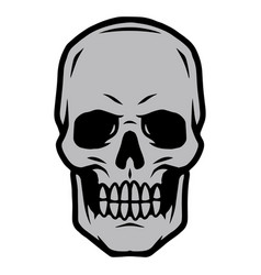 skull front view vintage concept vector image