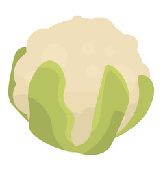 white cabbage icon isometric style vector image