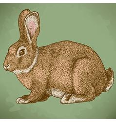 engraving rabbit retro vector image vector image