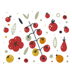 collection fresh red tomatoes cartoon flat vector image