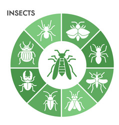 Modern insects infographic design template bugs vector