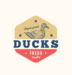Organi feeded ducks fresh poultry abstract vector