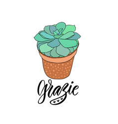 succulent in the pot with text - grazie thank you vector image