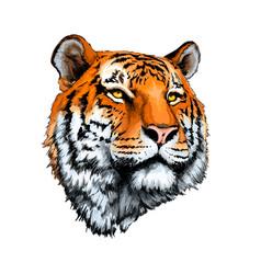 Tiger head portrait from a splash watercolor vector