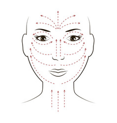 Facial massage lines for applying cream on face vector