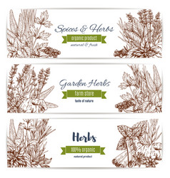 Herbs and spices organic plant sketch banner set vector