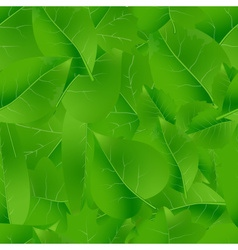 Natural green beautiful leaves seamless pattern vector