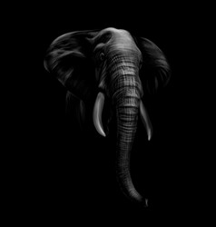 Portrait of an elephant head on a black background vector