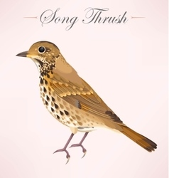 song thrush vector image