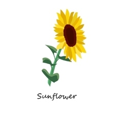 Sunflower Honey planty vector image