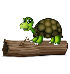 A turtle above the wood vector image