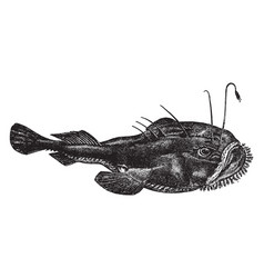 Anglerfish vintage vector
