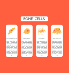 Bone cells type a scheme vector
