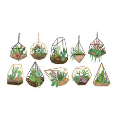 Collection succulents cactuses and other vector