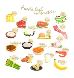 Food Rich In Proteins Poster vector image vector image