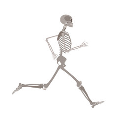 full-length running human skeleton cartoon flat vector image