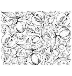 Hand drawn background of diospyros blancoi fruits vector