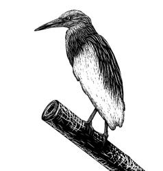 Pondheron sketch vector