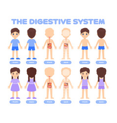 Set of cartoon graphic objects digestive system vector