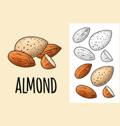 whole and half half almonds nuts with and without vector image