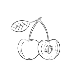 Hand drawn cherry sketches vector image