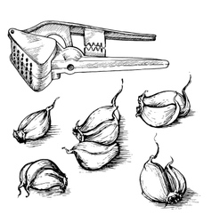 Hand drawn set of garlic cloves with press vector