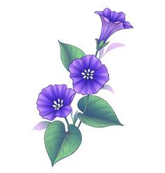Hand drawn violet bindweed flower with leaves vector