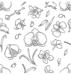 lisianthus flowers and leaves vector image