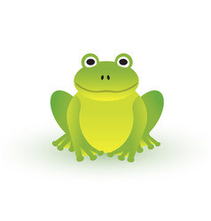 small green frog on white background vector image