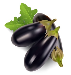 Egg plant vector image