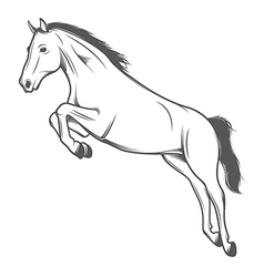 Jumping horse isolated on white background vector image