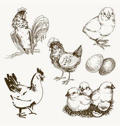 chicken breeding hand drawn set engraved vector image